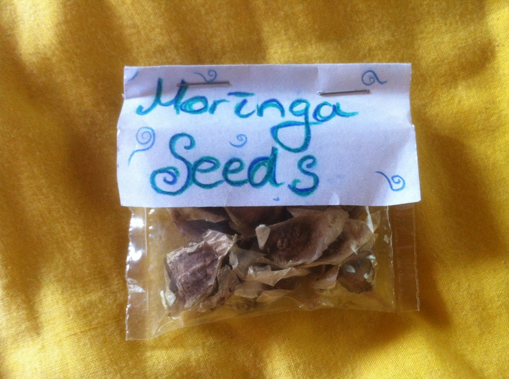 Moringa seeds!